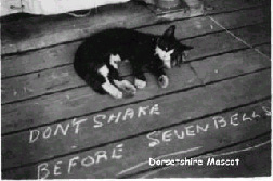 Dorsetshires cat