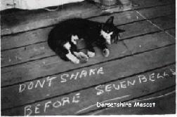 Dorsetshires cat